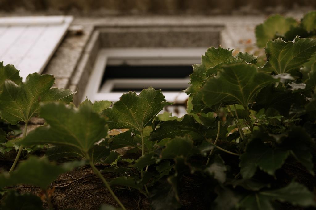 moinardiere vigne fenêtre maison