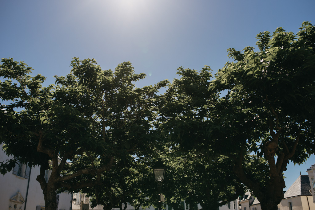 Noirmoutier arbres ciel bleu soleil