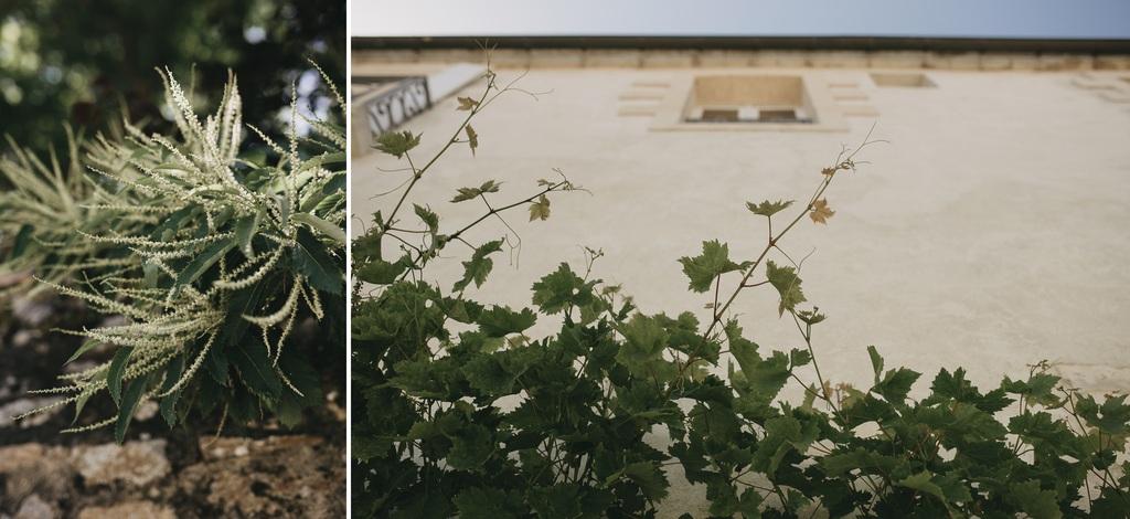 plantes ruelles Noirmoutier vigne fenêtre ciel bleu