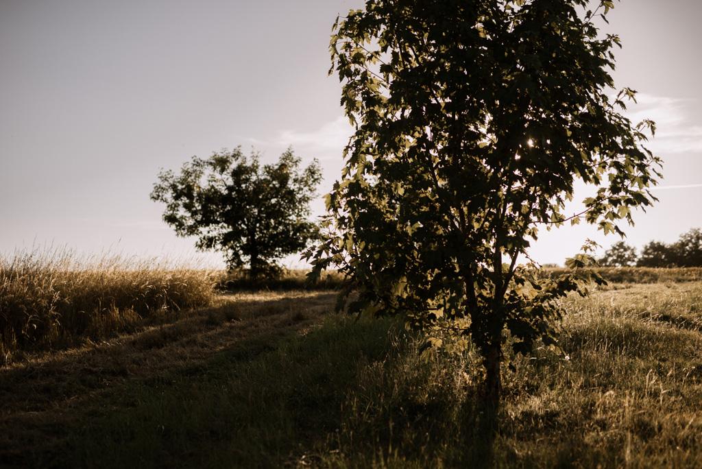 arbres campagne champ contre-jour