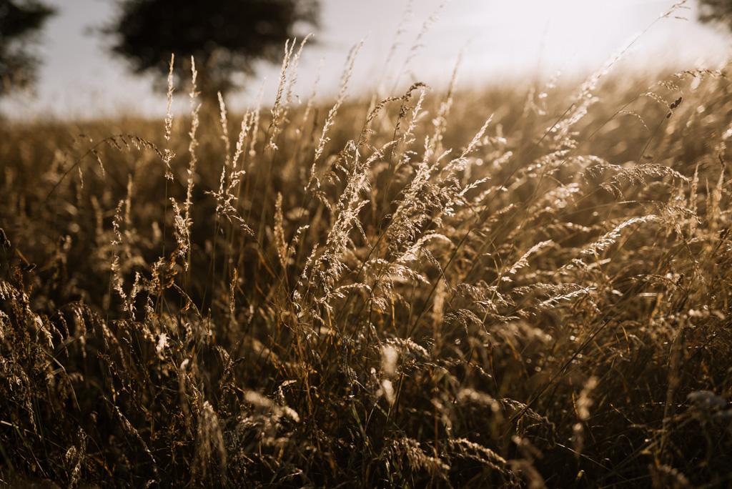 champ contre-jour soleil été