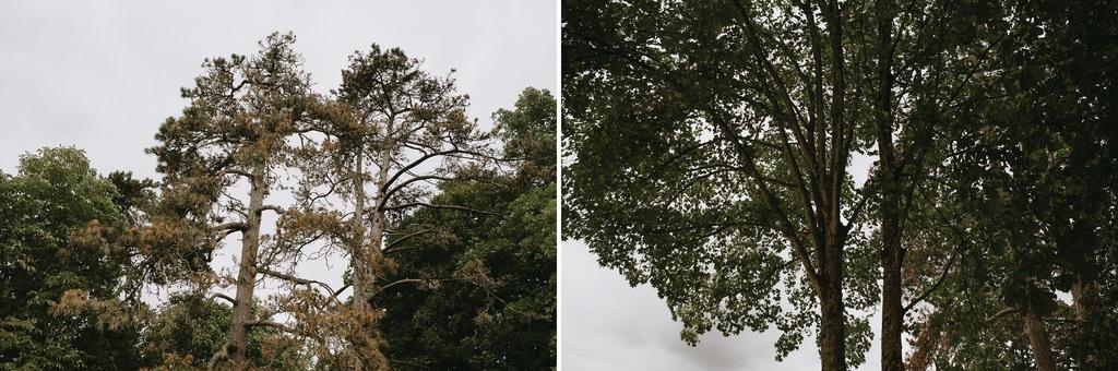 arbres mariage ciel nuagueux