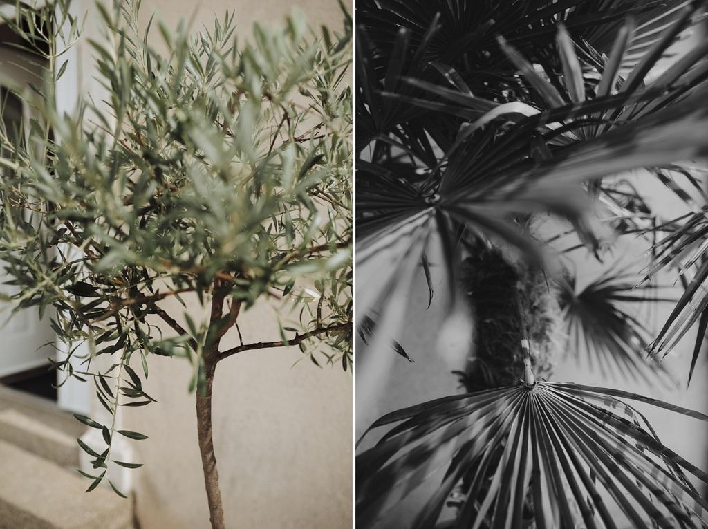 olivier palmier château sébrandière