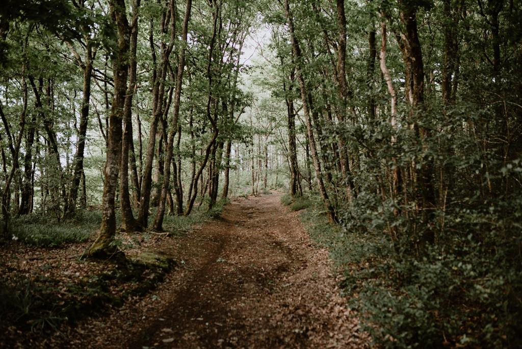 chemin forêt de mervent vendée arbres