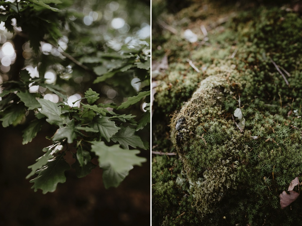 feuille chêne mousse forêt mervent