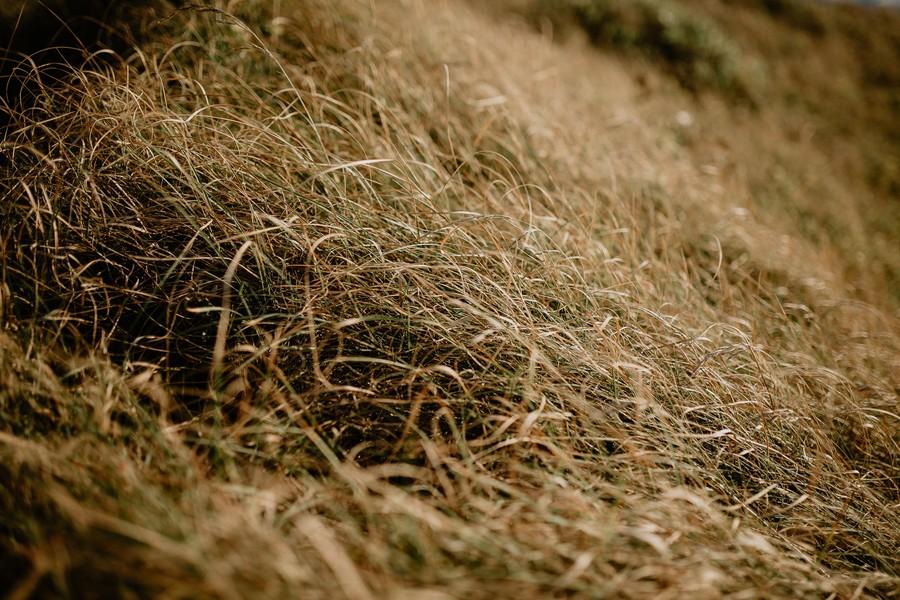 engagement herbe côte vendéenne