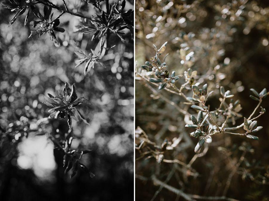 chênes verts Cayola décor paysage lumière