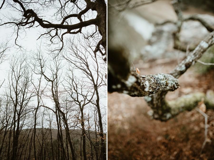 forêt Mervent arbres mousse tronc séance photo Vendée Saint-Valentin