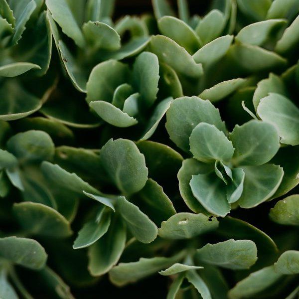 orpin feuilles vertes motifs défi coronavirus confinement covid-19