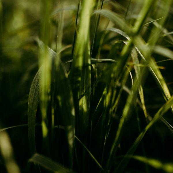 ombre lumière herbe soleil fin journée défi confinement
