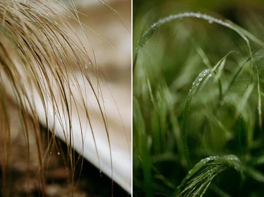 pluie gouttes stipa herbe mouillée verte courbes défi coronavirus confinement covid-19