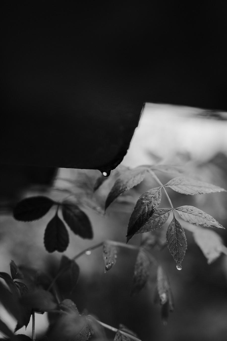 goutte pluie tuile toit contraste feuille frêne noir et blanc défi coronavirus confinement covid-19