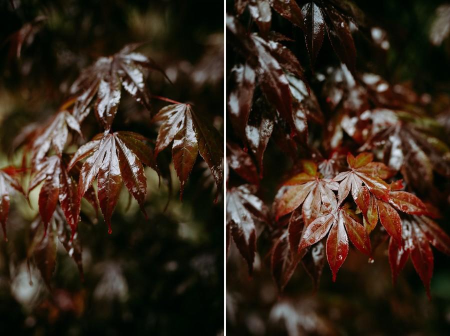 feuilles mouillées pluie érables japonais blood good défi coronavirus confinement covid-19