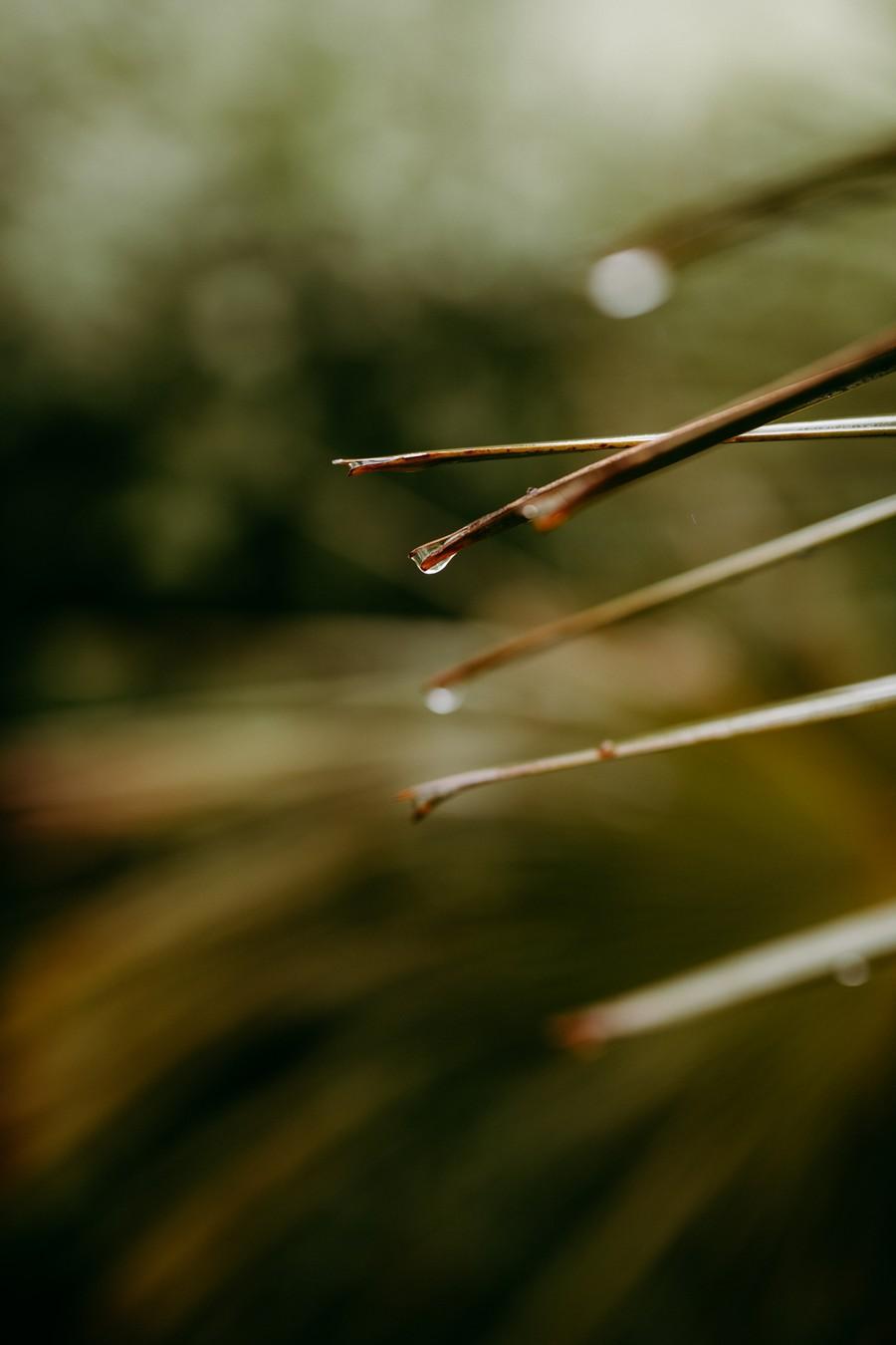 goutte pluie palme trachycarpus fortunei défi coronavirus confinement covid-19
