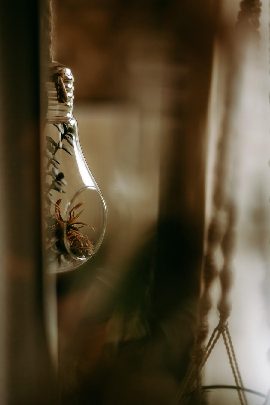 verre plantes ampoule reflets lumière défi coronavirus confinement covid-19