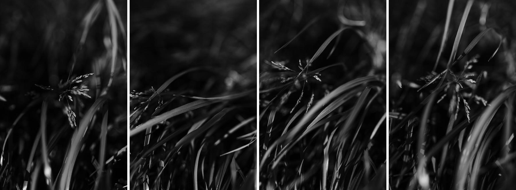 Vent Herbes Pré Noir et blanc Photographie Confinement Défi